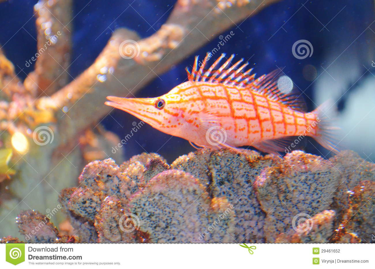 Poissons d 39 aquarium illustration stock illustration du for Aquarium 1 poisson