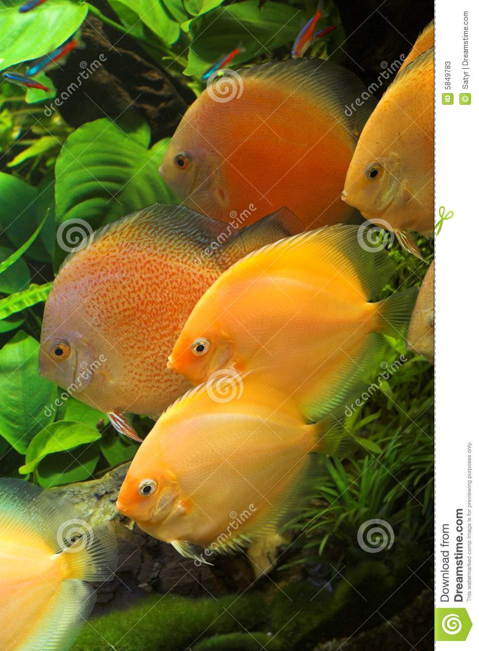 Poissons d 39 aquarium image stock image du aqua oc an for Prix poisson aquarium