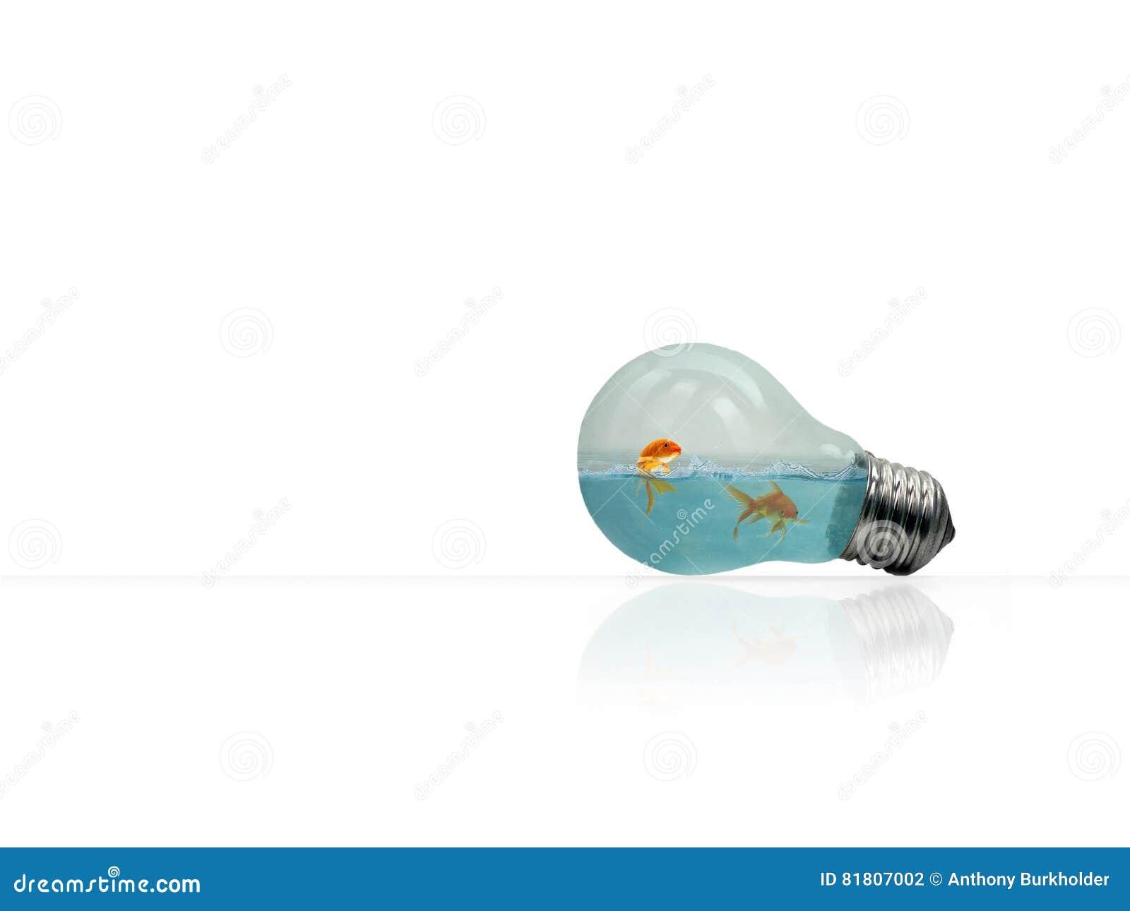 Poissons dans une ampoule