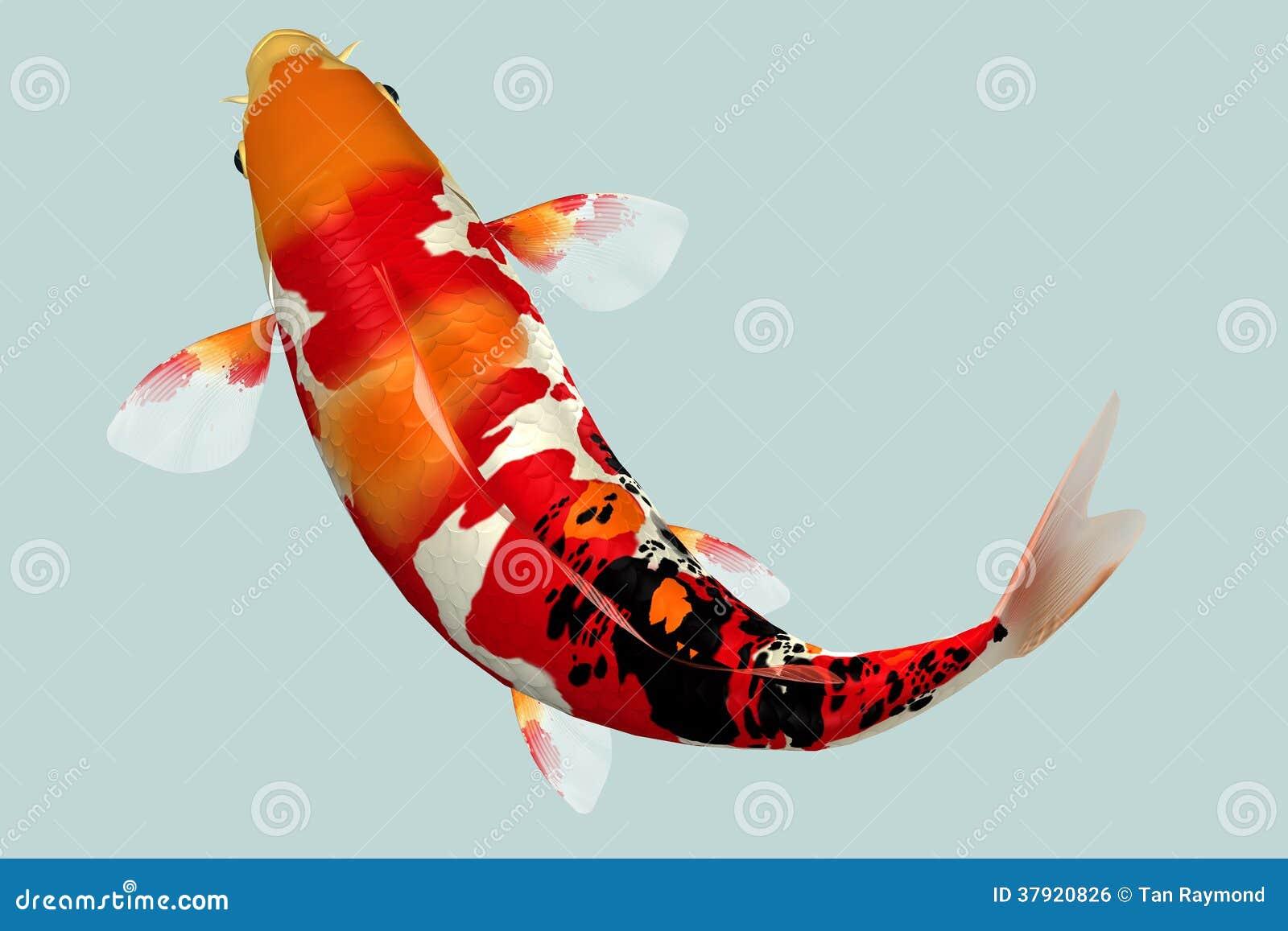 Poissons de koi image libre de droits image 37920826 for Koi poisson prix