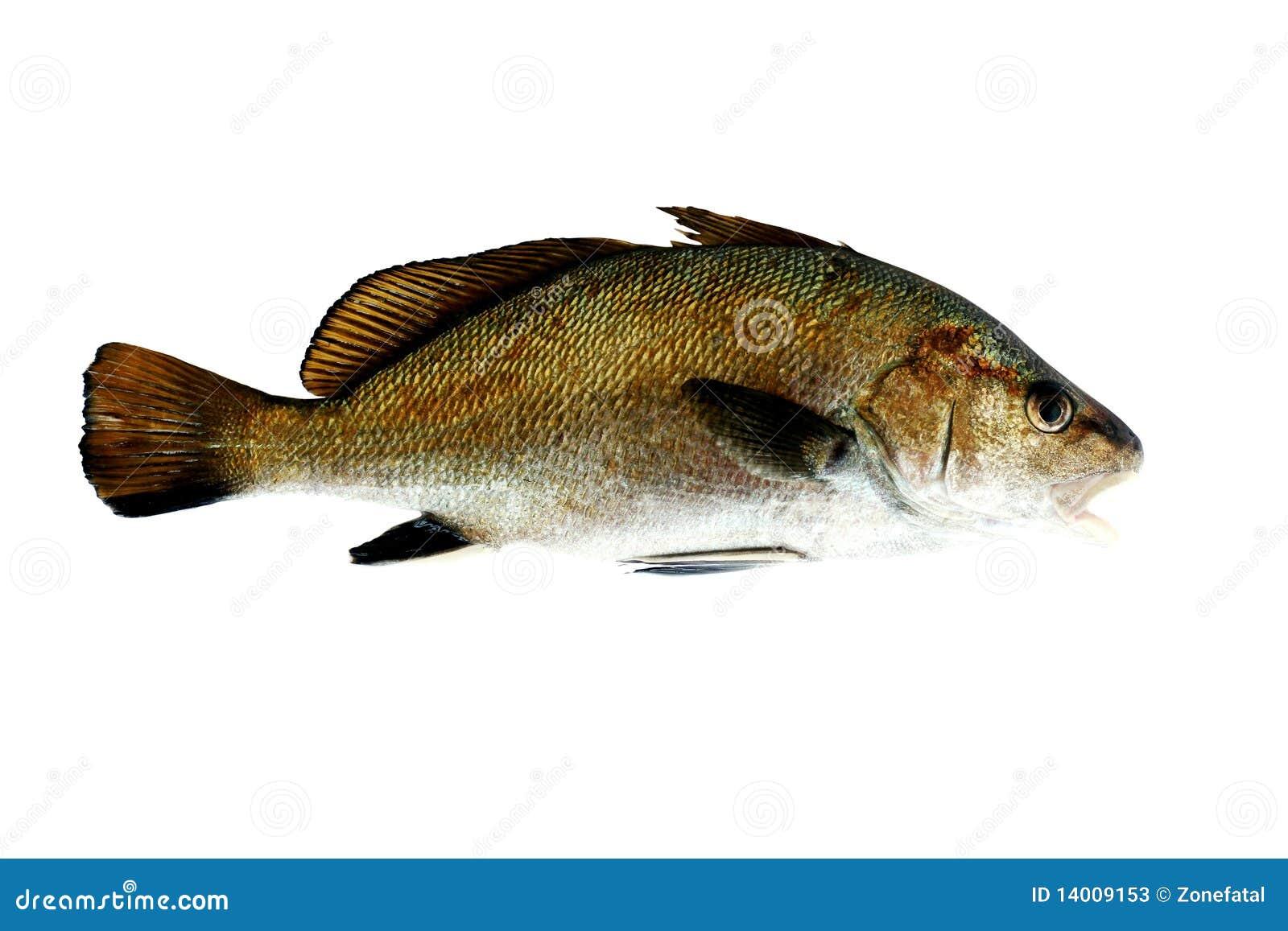 exemple de poisson maigre