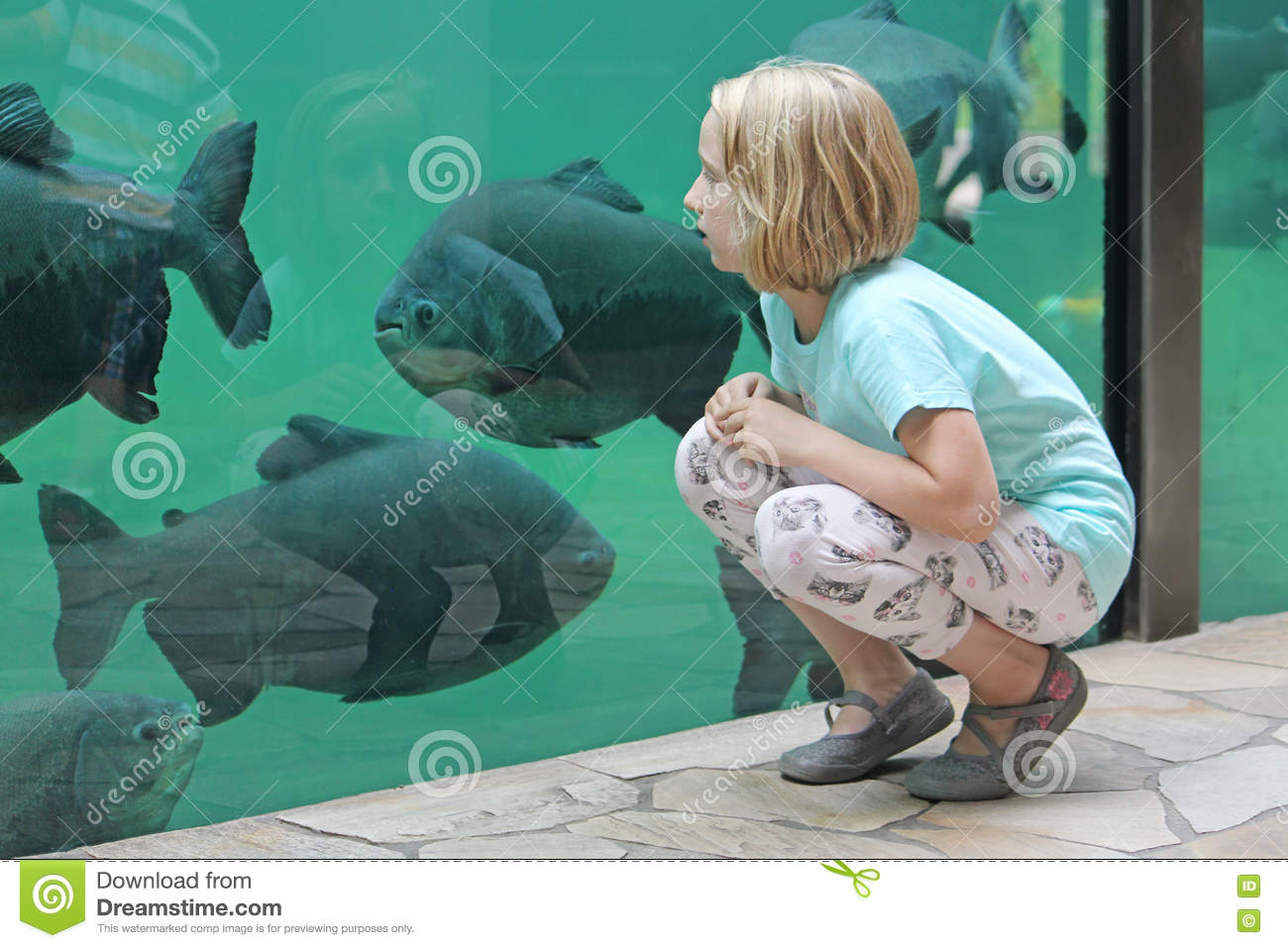 Poissons de mer de observation de fille d 39 enfant dans un grand aquarium image stock image du - Grand poisson de mer ...