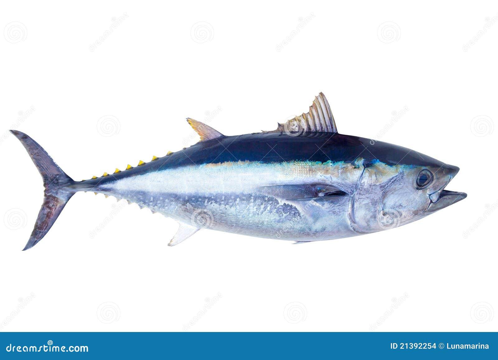 Poissons de mer de thynnus de thunnus de thon de thonine - Grand poisson de mer ...