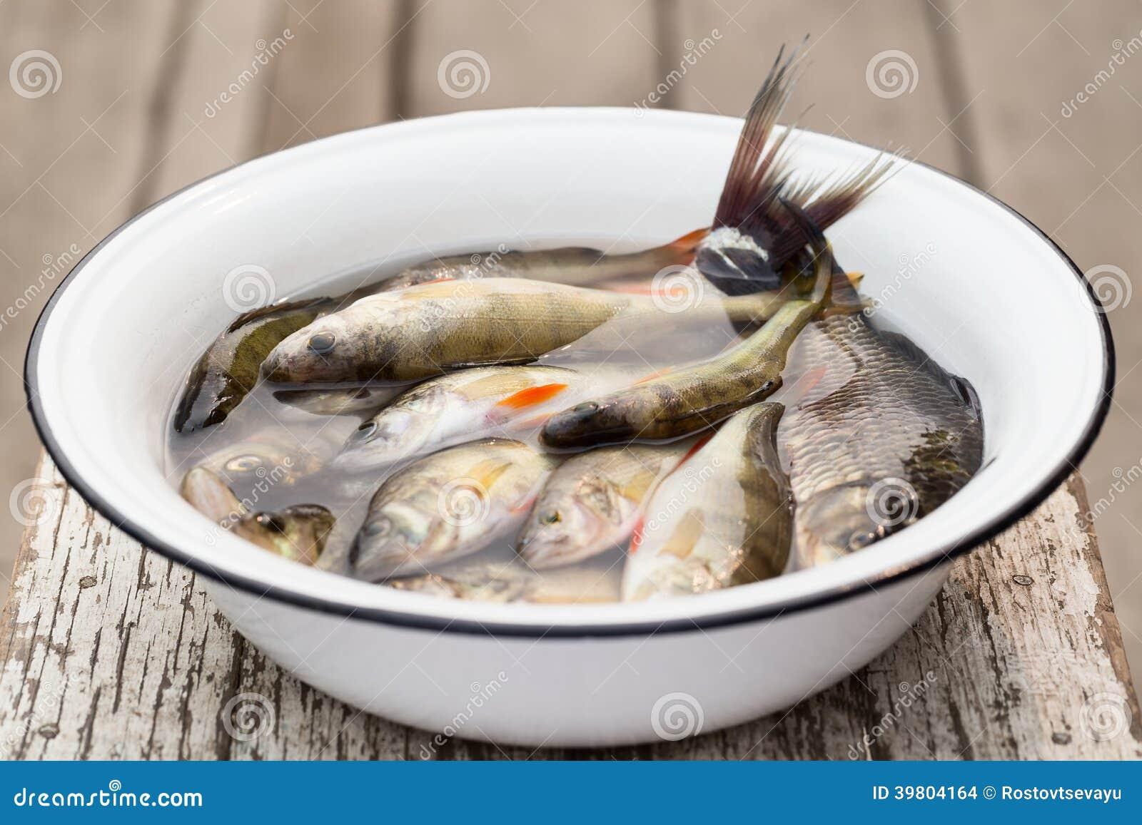 Poissons De Rivi Re Dans Un Bassin Blanc Avec De L 39 Eau Photo Stock Image 39804164