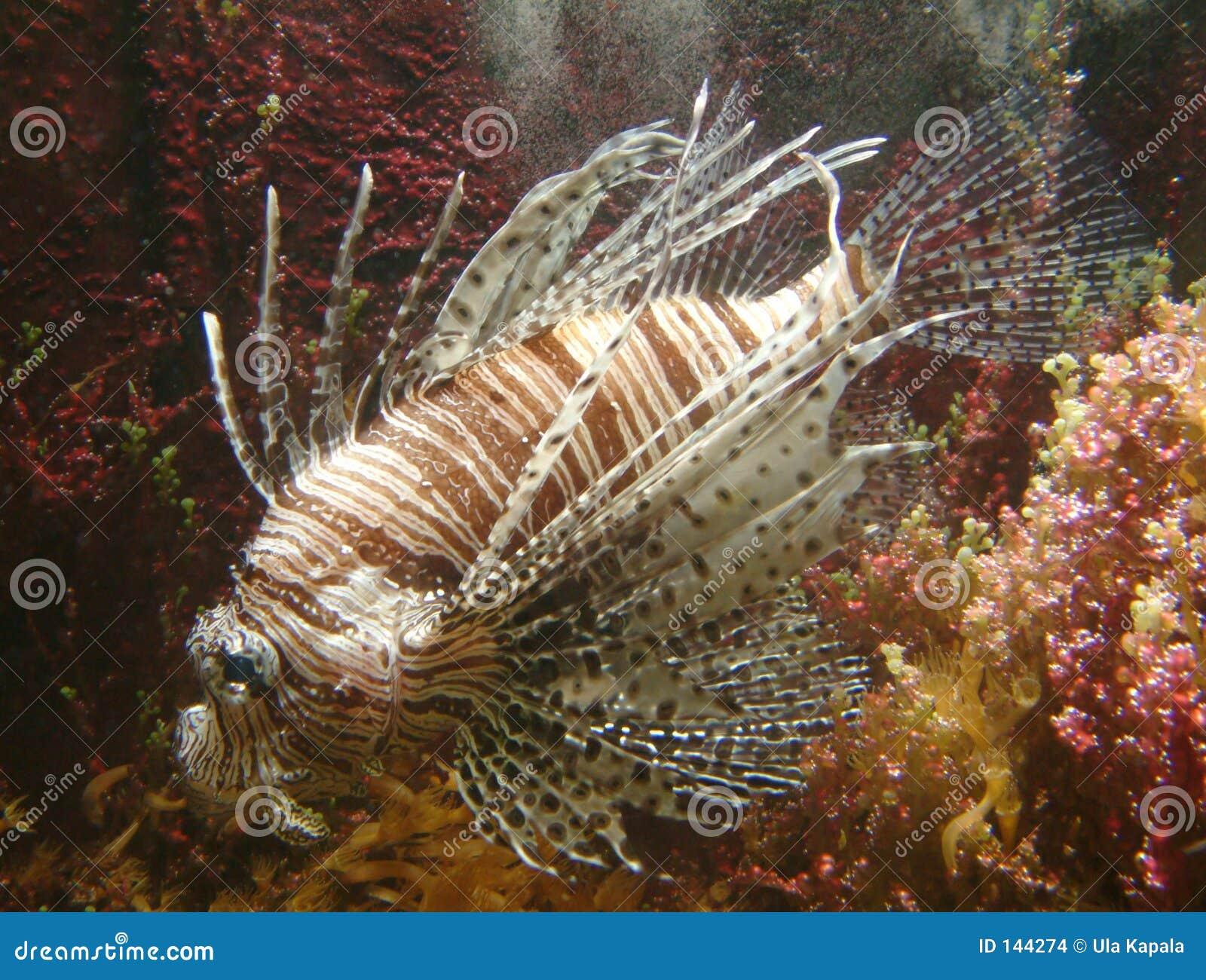 Poissons exotiques images stock image 144274 for Poissons exotiques aquarium