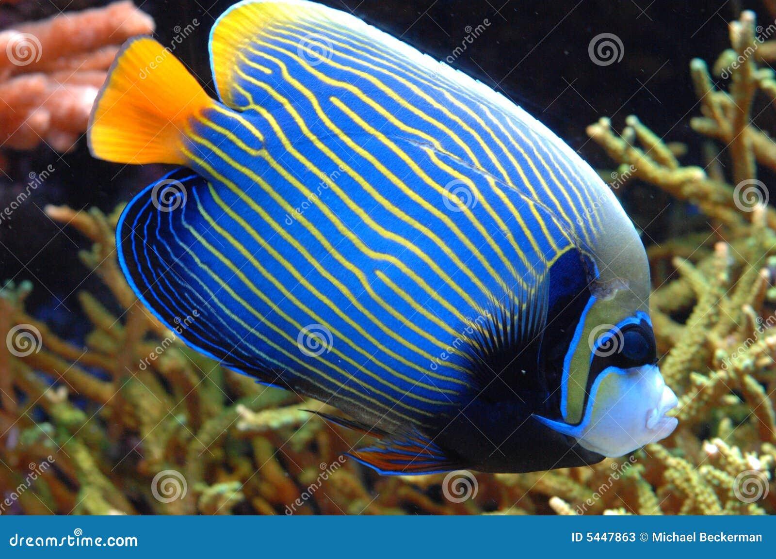 poisson exotique prix poissons exotiques 20 photos stock image 5447863