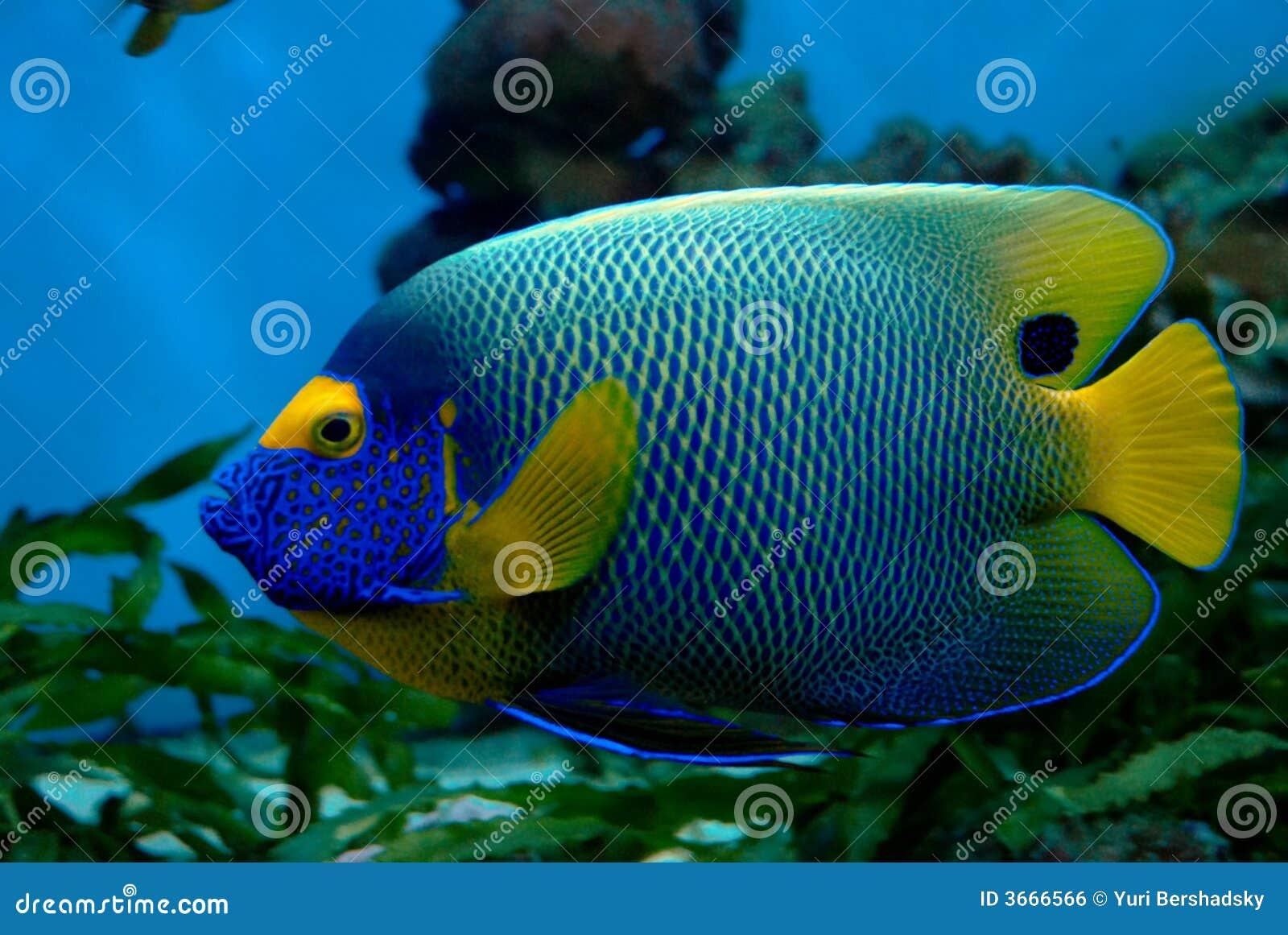 poissons exotiques image libre de droits image 3666566. Black Bedroom Furniture Sets. Home Design Ideas