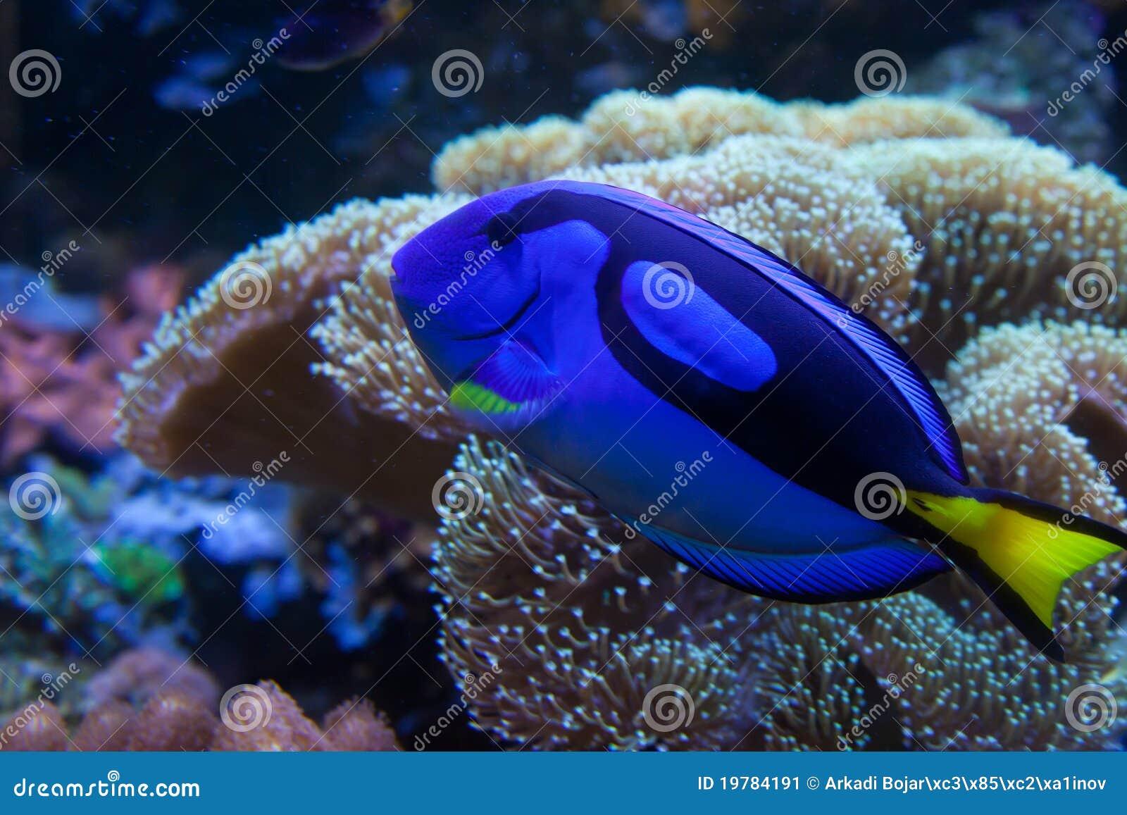 poissons exotiques d 39 aquarium image stock image 19784191. Black Bedroom Furniture Sets. Home Design Ideas