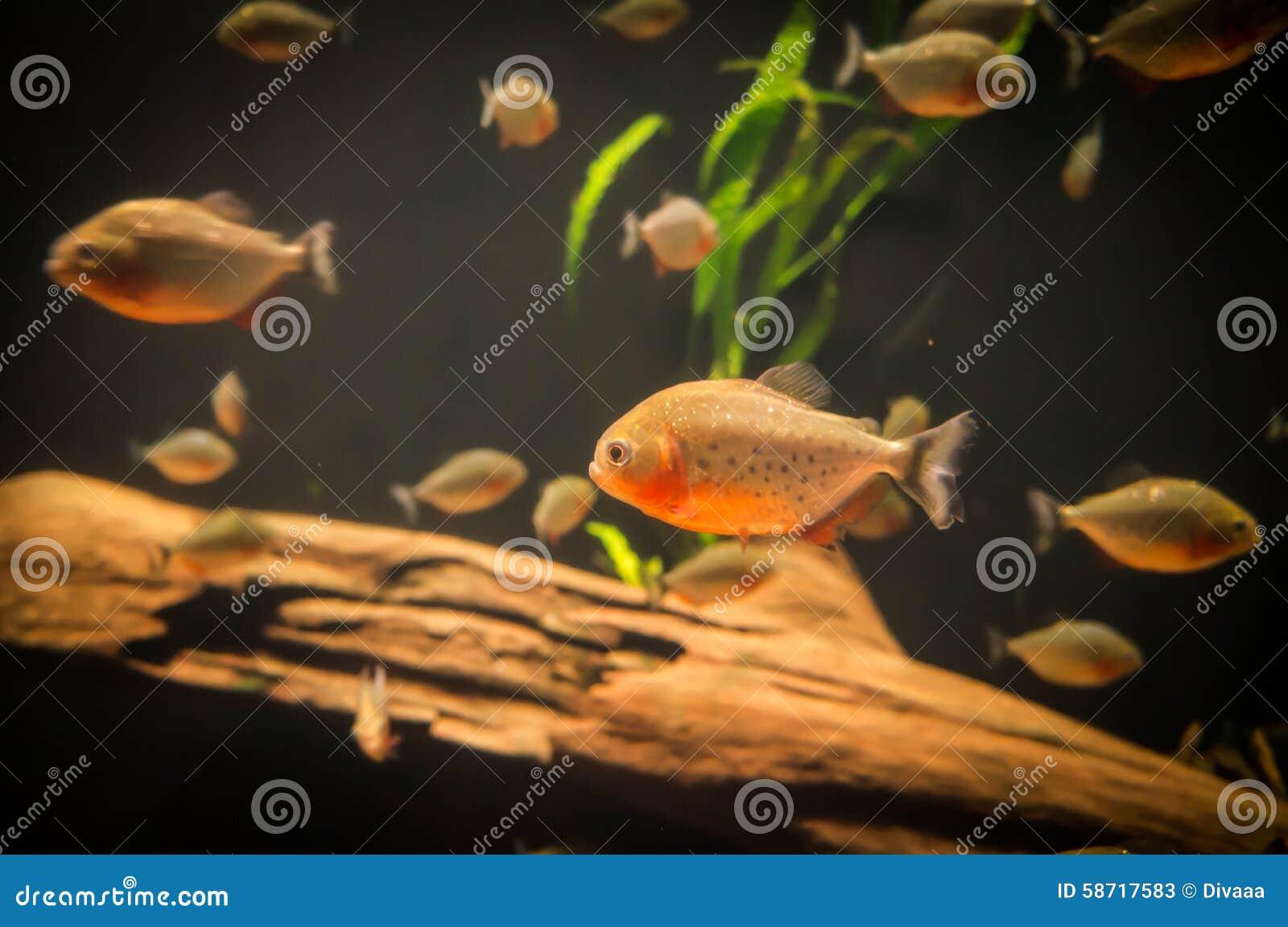 Poissons exotiques dans un aquarium photos stock for Poissons exotiques aquarium