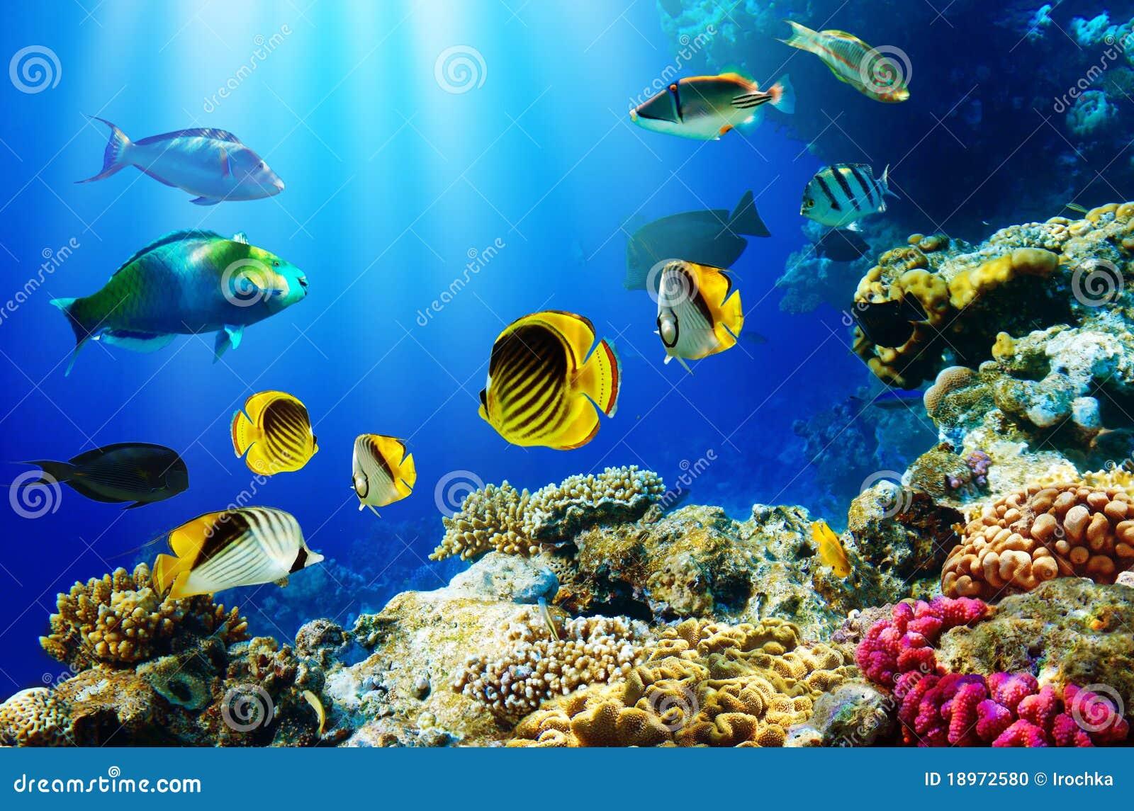 Poissons tropicaux au-dessus du récif coralien