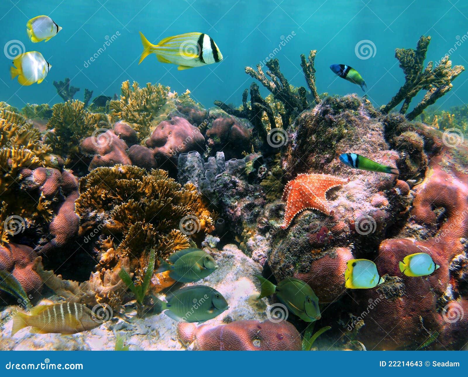 Poissons tropicaux dans les coraux