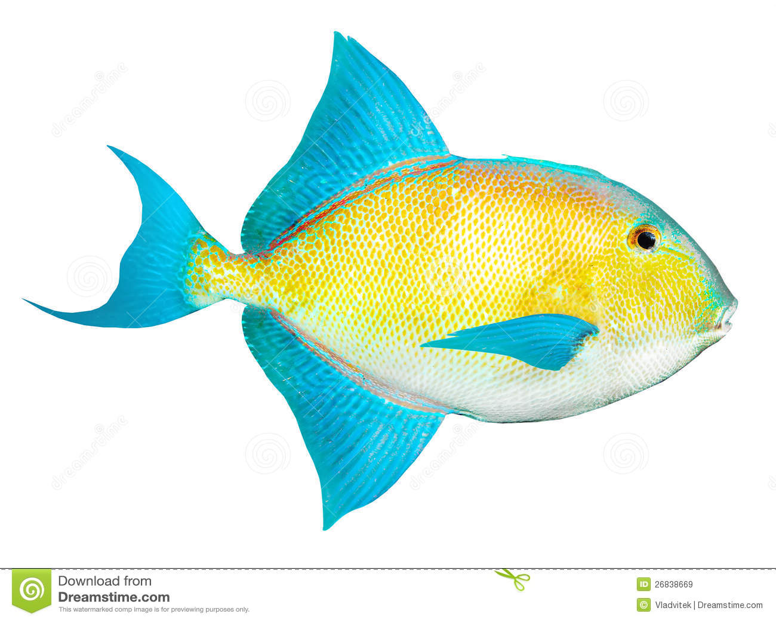 poissons tropicaux de mer des cara bes image stock image du fond aquatique 26838669. Black Bedroom Furniture Sets. Home Design Ideas