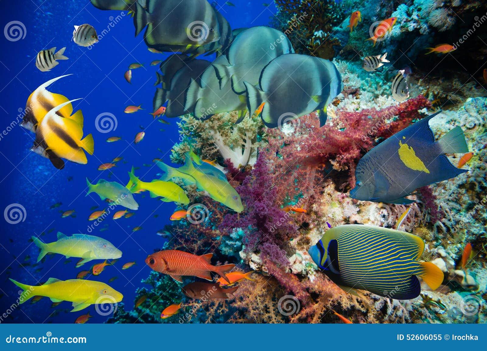 Poissons tropicaux et récif coralien