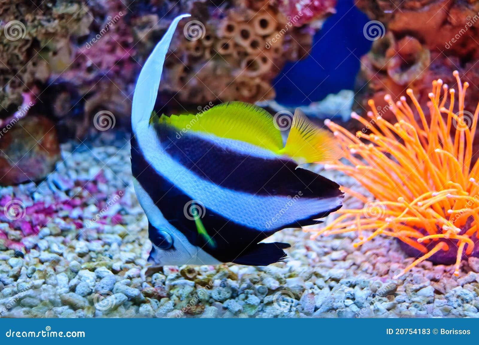 Poissons tropicaux marins image stock image du bleu for Sfondi pesci tropicali
