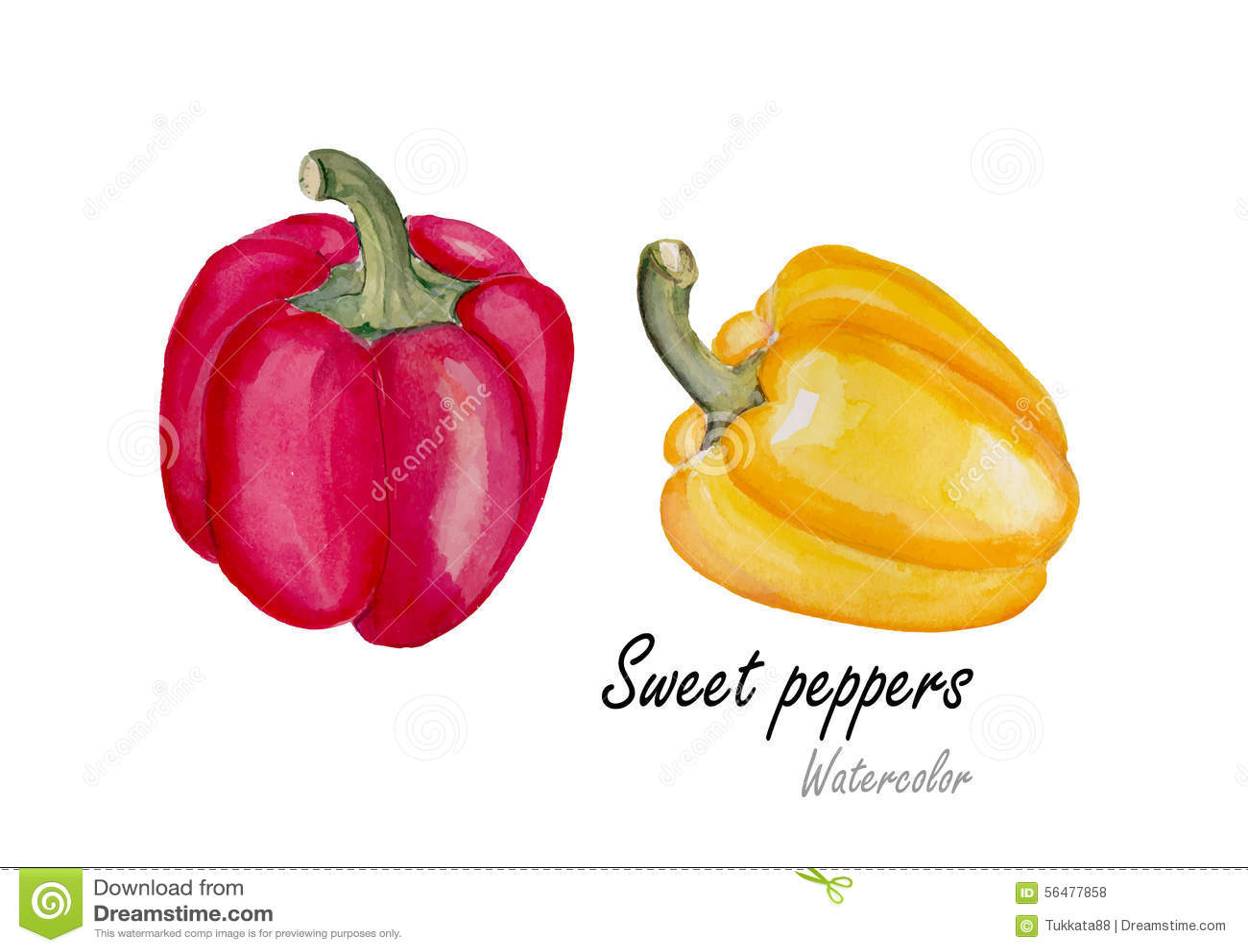 Poivron doux rouge et jaune Peinture tirée par la main d aquarelle sur le fond blanc Illustration de vecteur