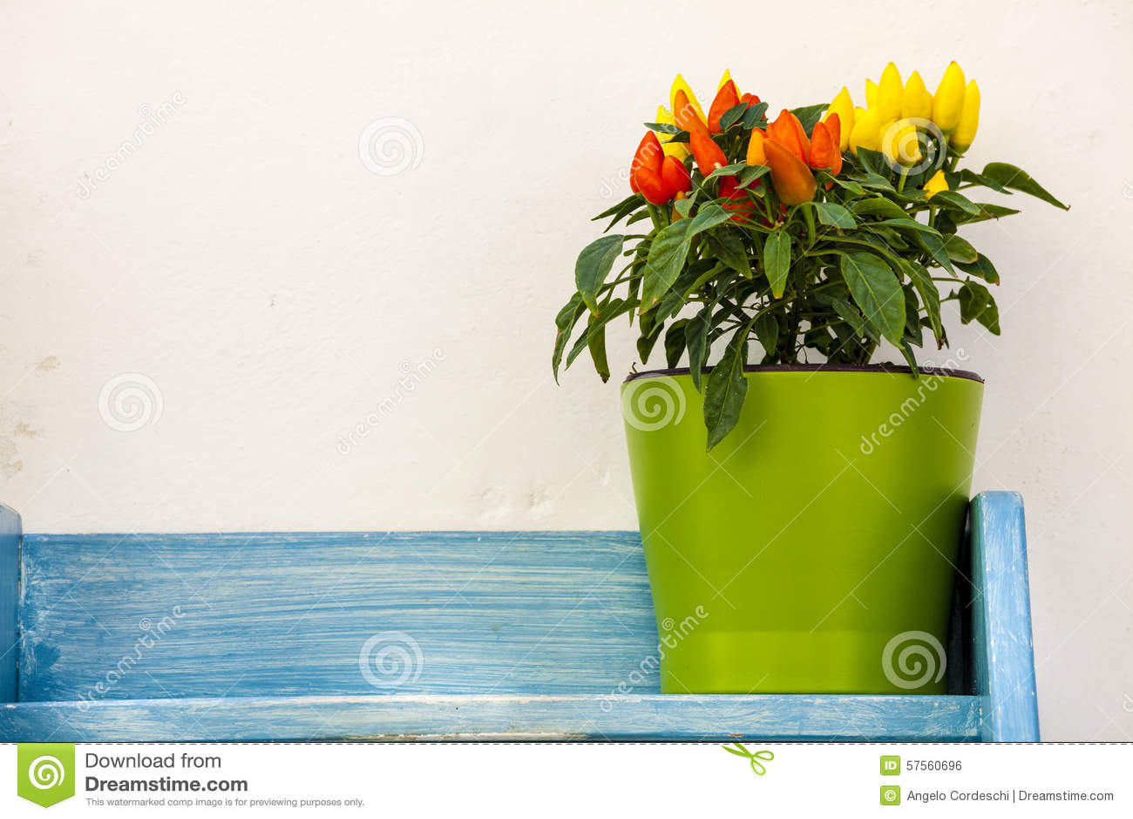 Poivrons de pot de fleurs sur le bleu en bois d étagère