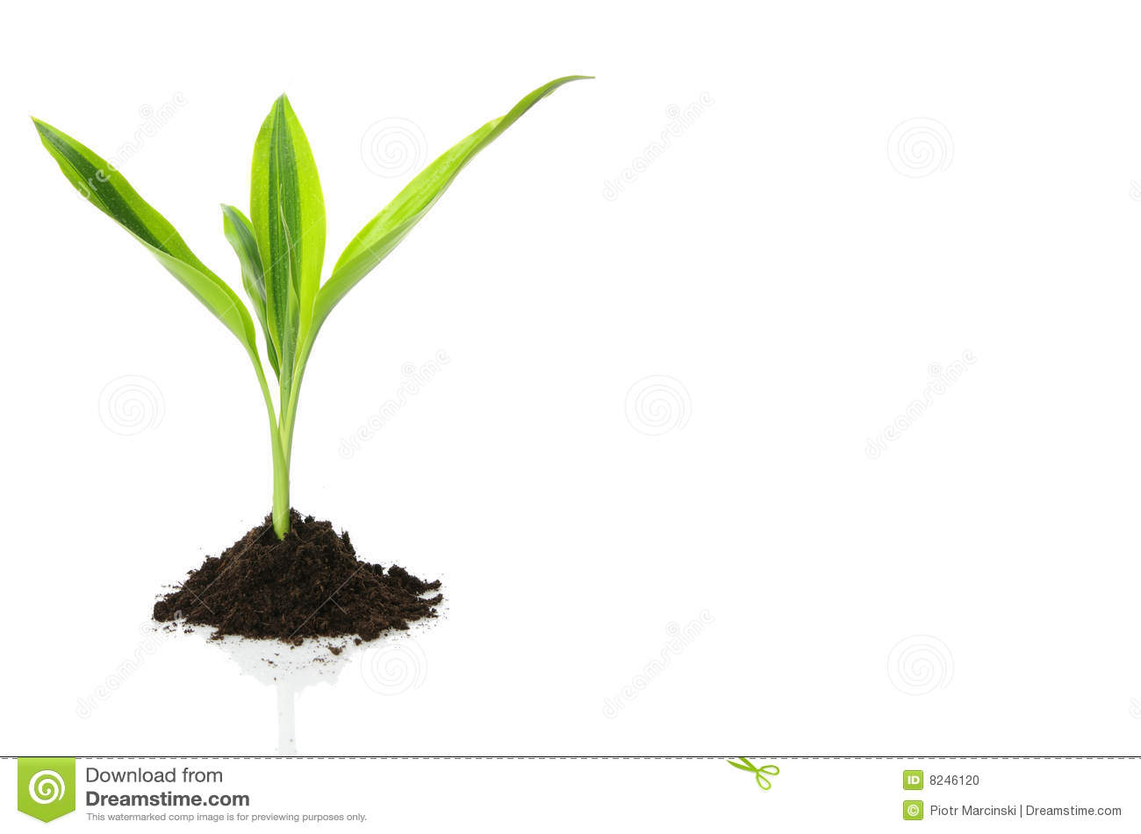 Pojęcia projekta wzrostowy życie nowy