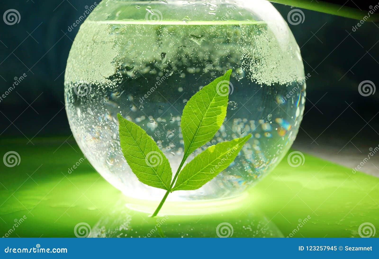 Pojęcie ekologia gałąź zieleni woda w a i liście