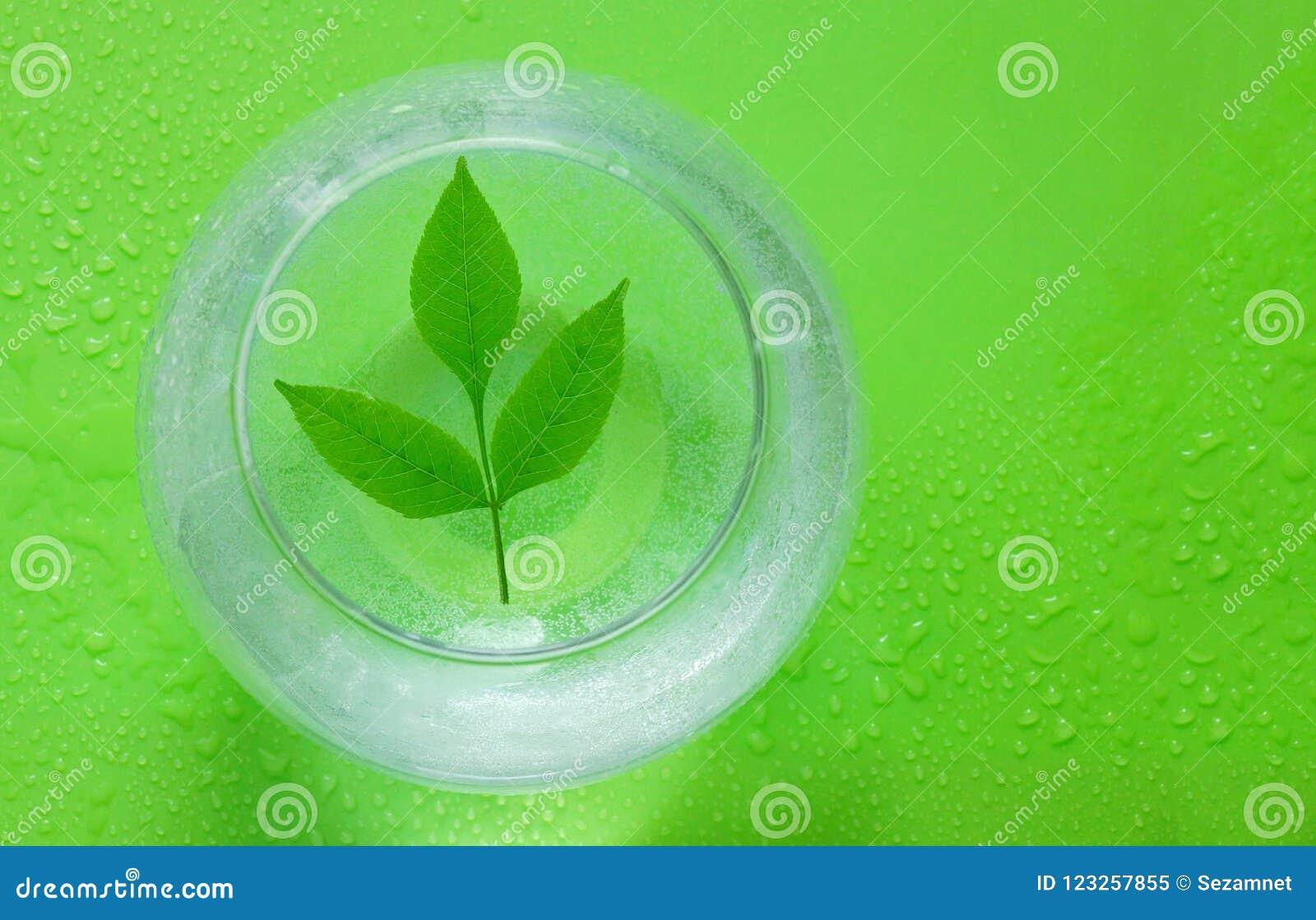Pojęcie ekologia zieleń liście rozgałęziają się i nawadniają w spher