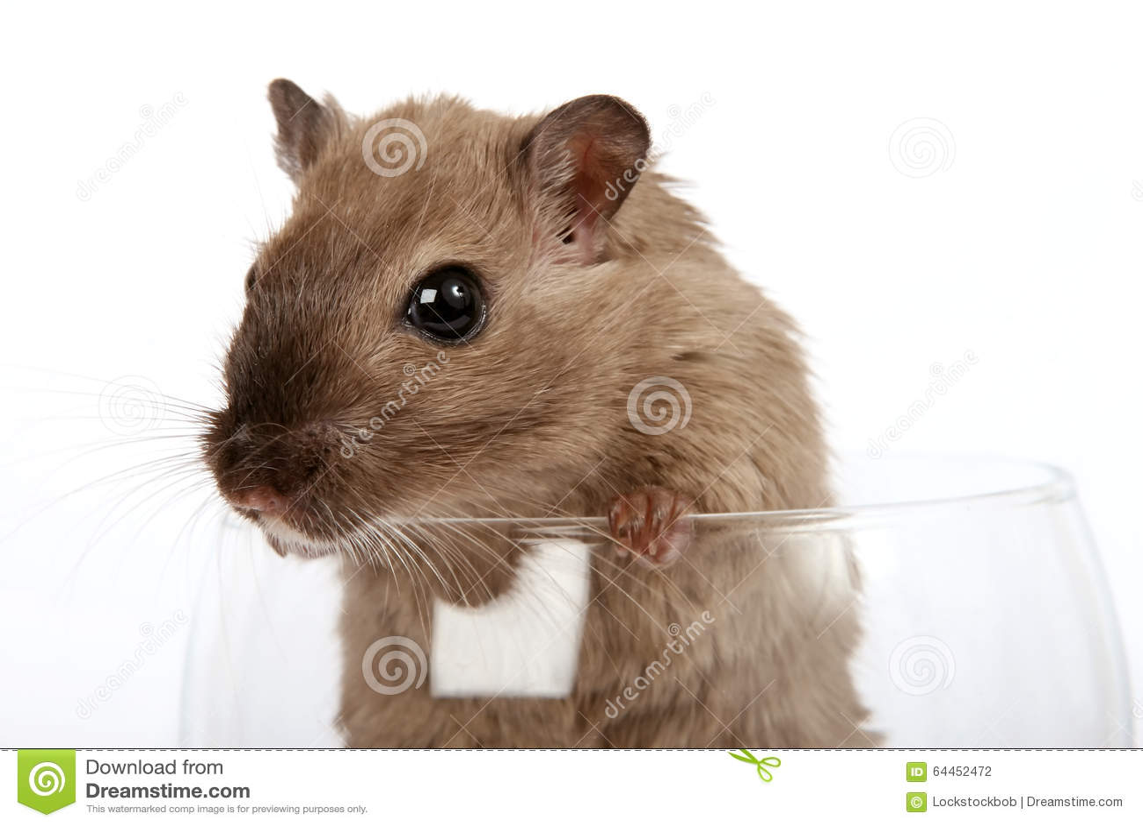 Pojęcie fotografia zwierzę domowe ślepuszonka w wina szkle