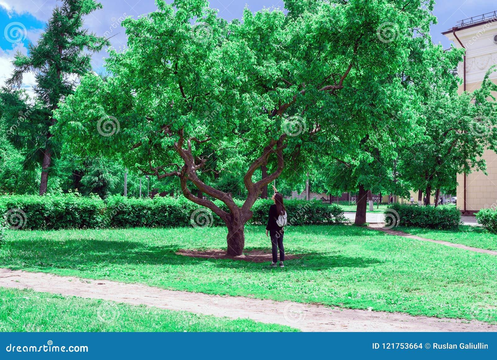 Pojęcie natury ochrona, ekologia, miłość natura młodej kobiety stojaki pod dużym zielonym drzewem i patrzeją up przy liśćmi