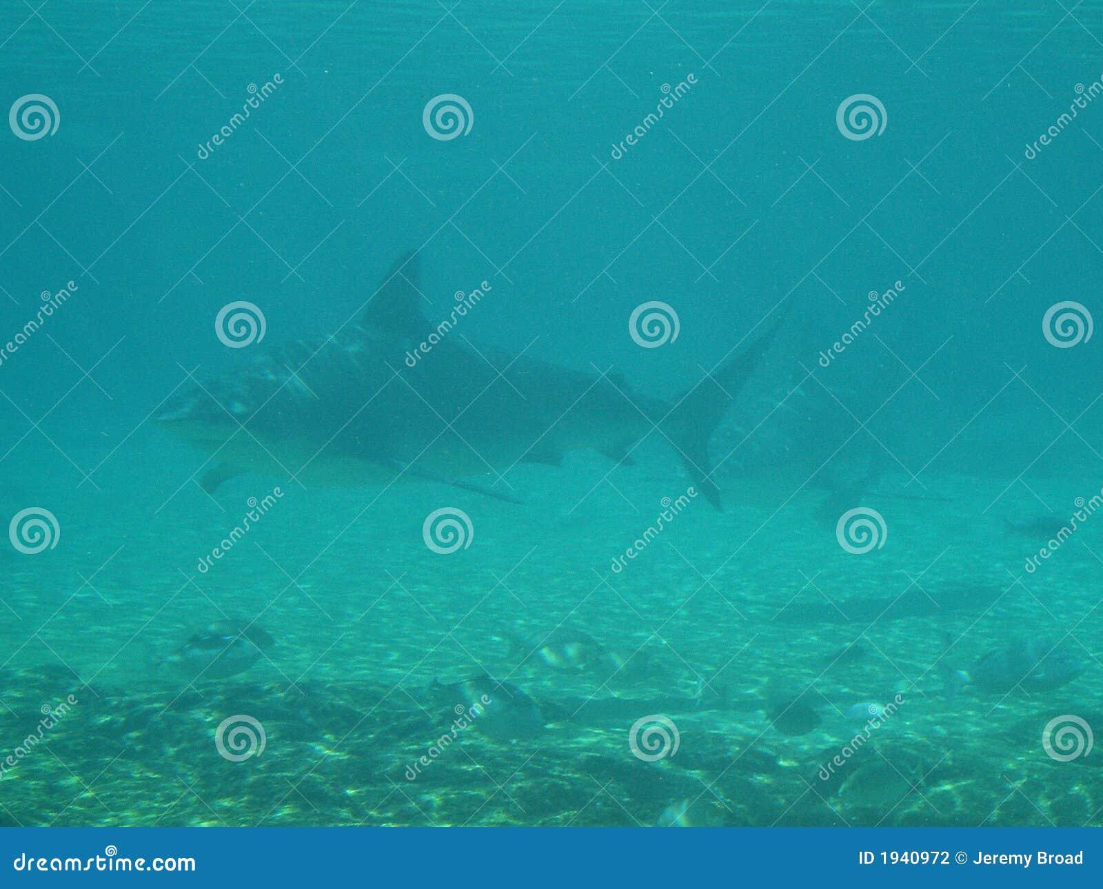 Pojawiły się rekiny zawieranych na odległość