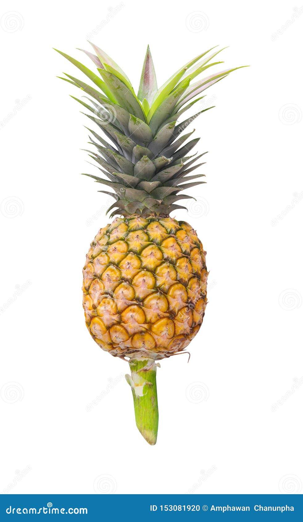 Pojedyncza ananasowa owoc z zieleń liści wzorami na białym tle i trzon odizolowywający, ścinek ścieżka