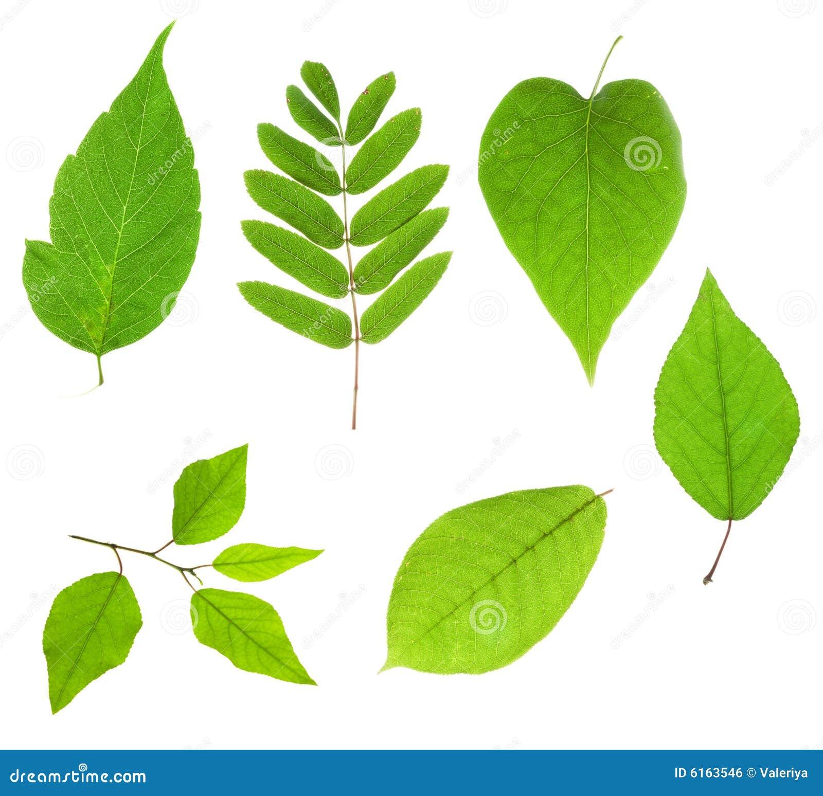 Pojedyncze liście