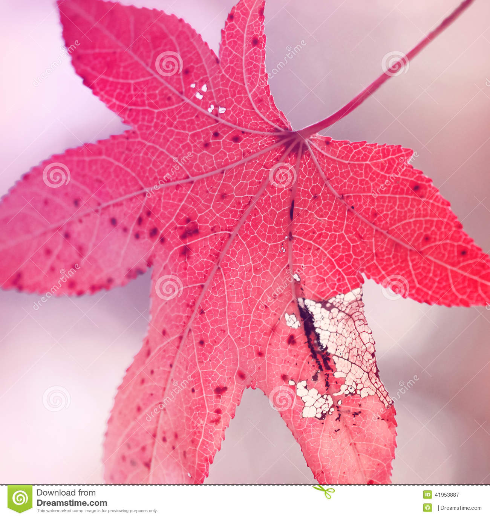 Pojedynczy czerwony jesień liść