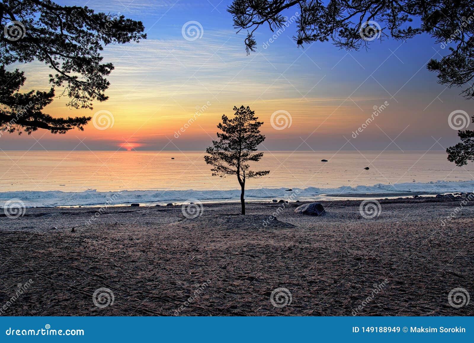 Pojedynczy drzewo przeciw zmierzchowi przy zatok? Finland