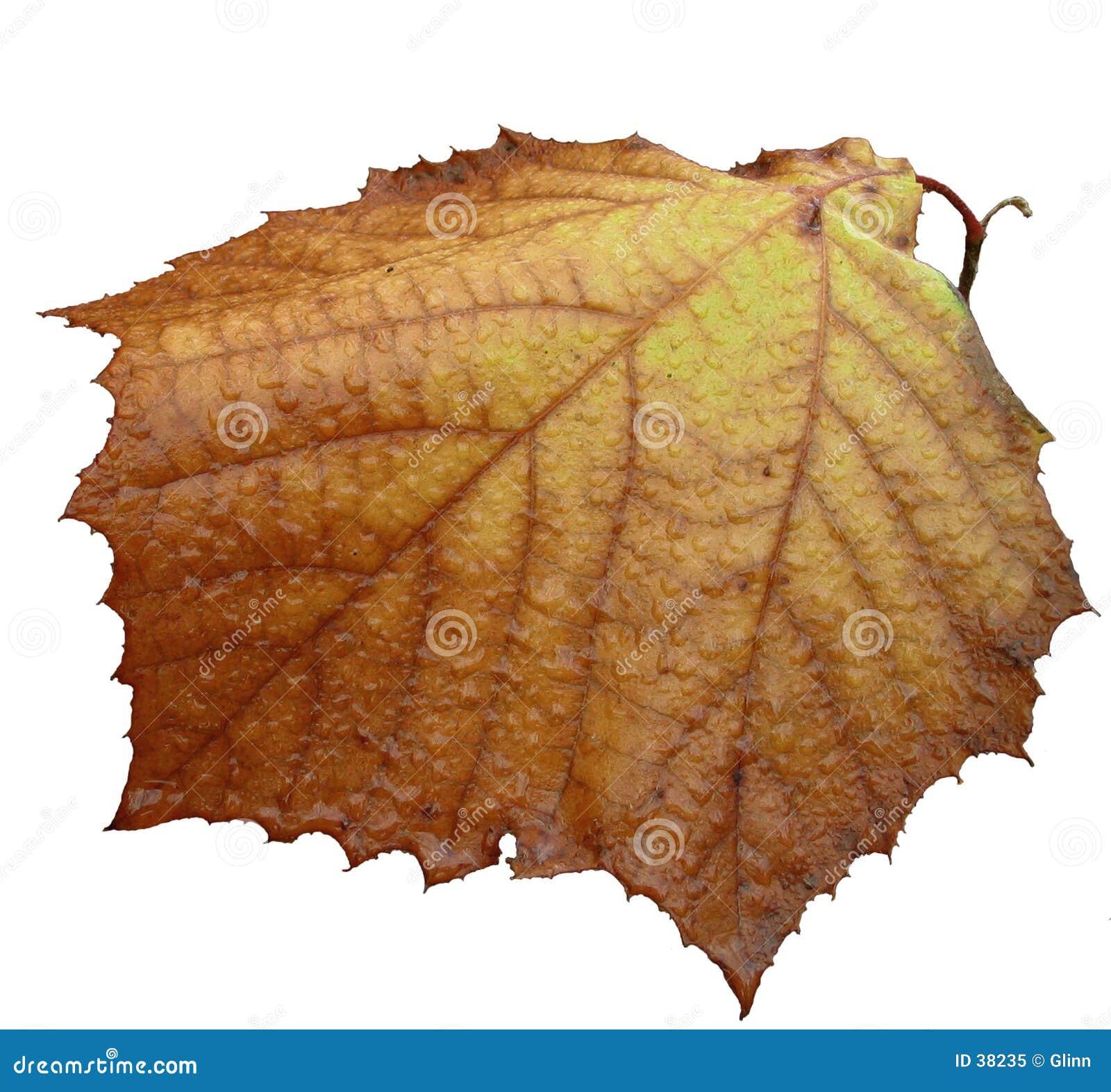 Pojedynczy jesienią ostatni liść