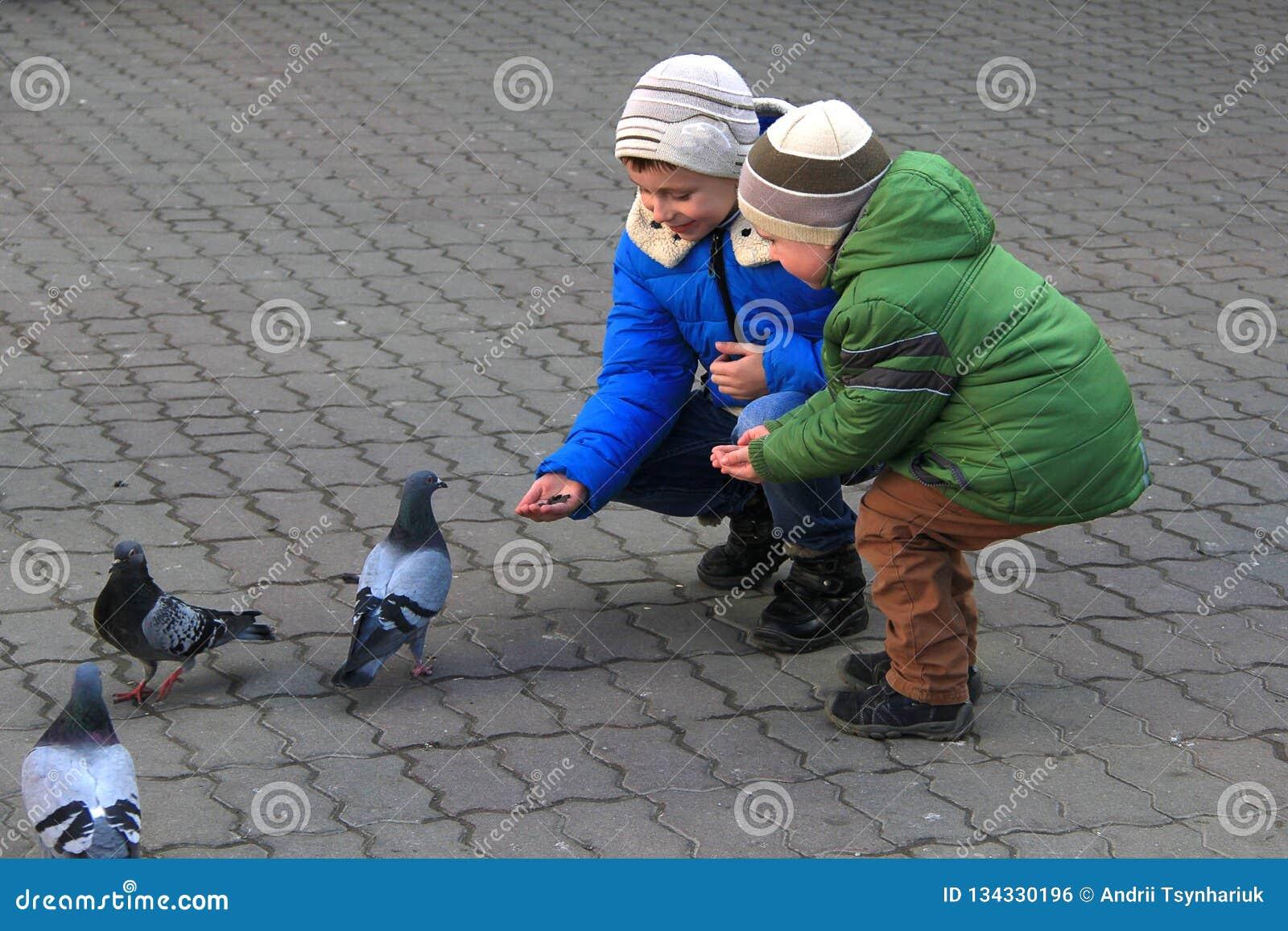 Pojkarna med modern på de fyrkantiga matningsduvorna