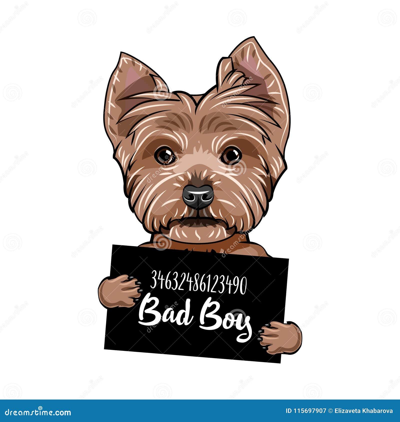 Pojke för Bad för Yorkshire terrier Hundfängelse Tillfoga ditt foto Brottsling för Yorkshire terrier vektor