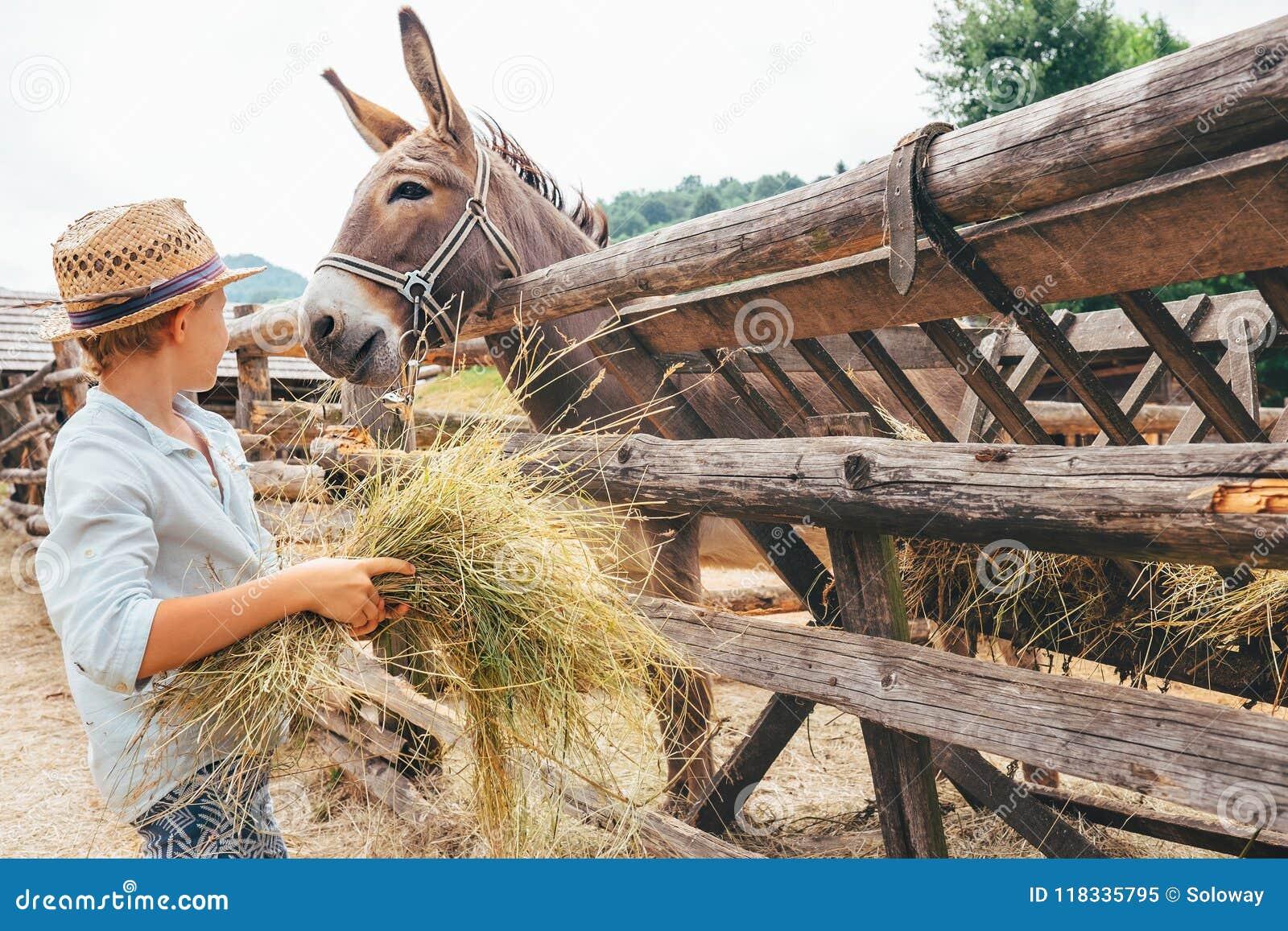 Pojken hjälper på lantgården - matningar en åsna