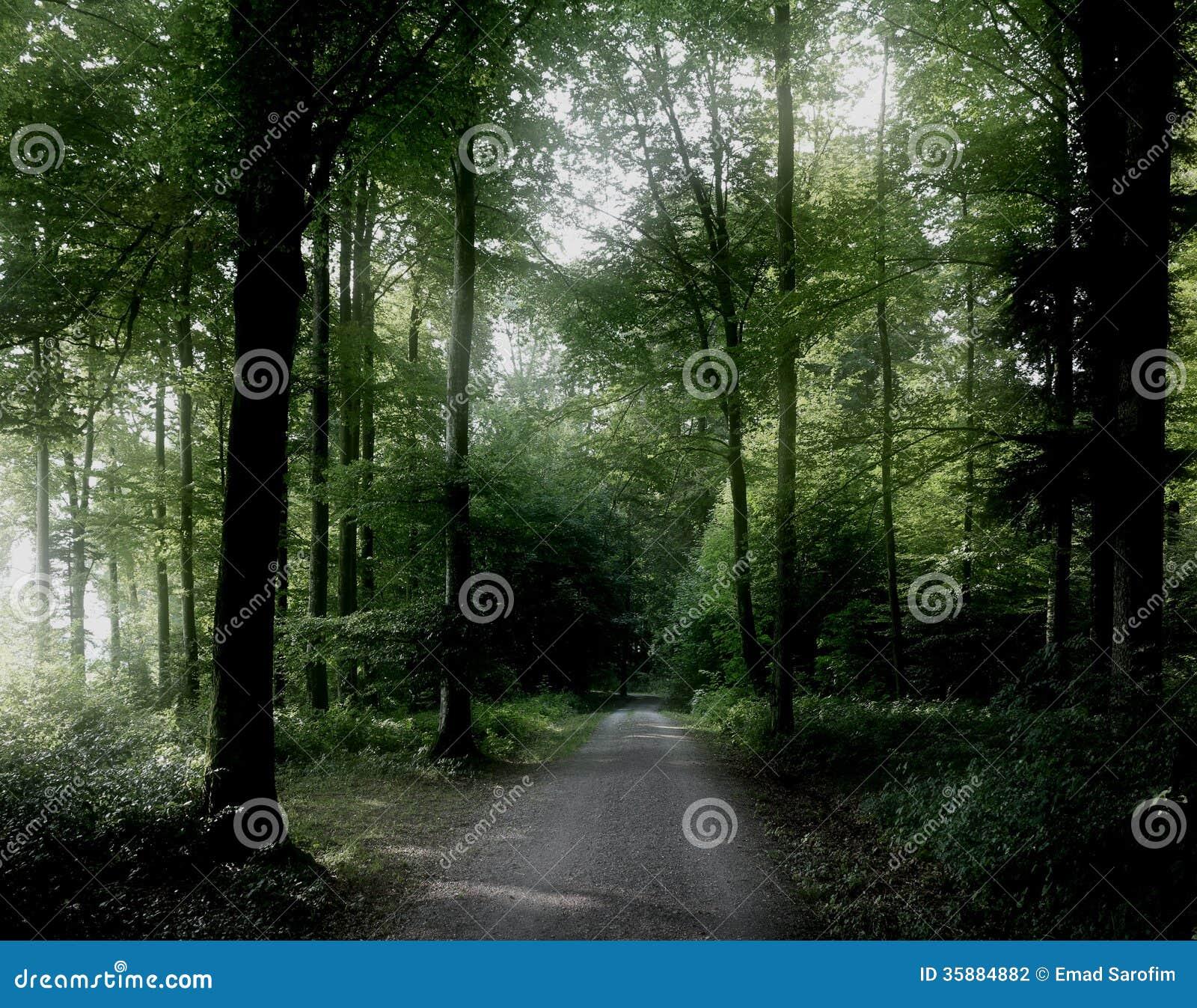 Pokojowy las