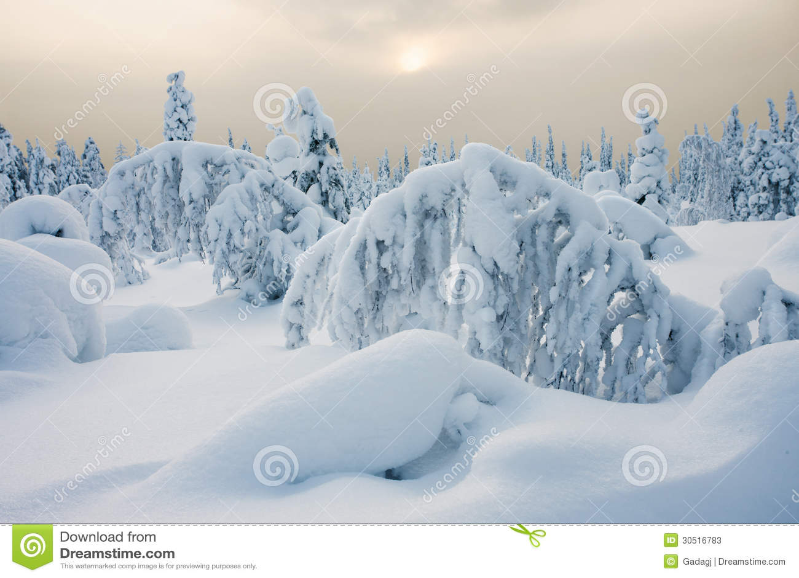 Pokojowy zima dzień
