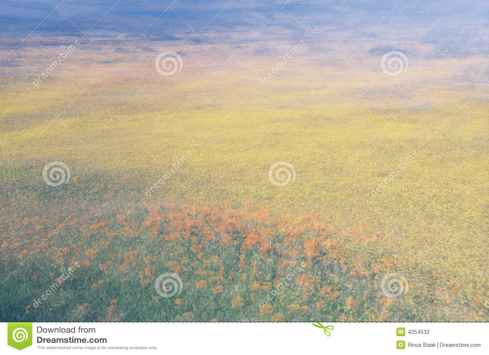 Pola abstrakta kwiat