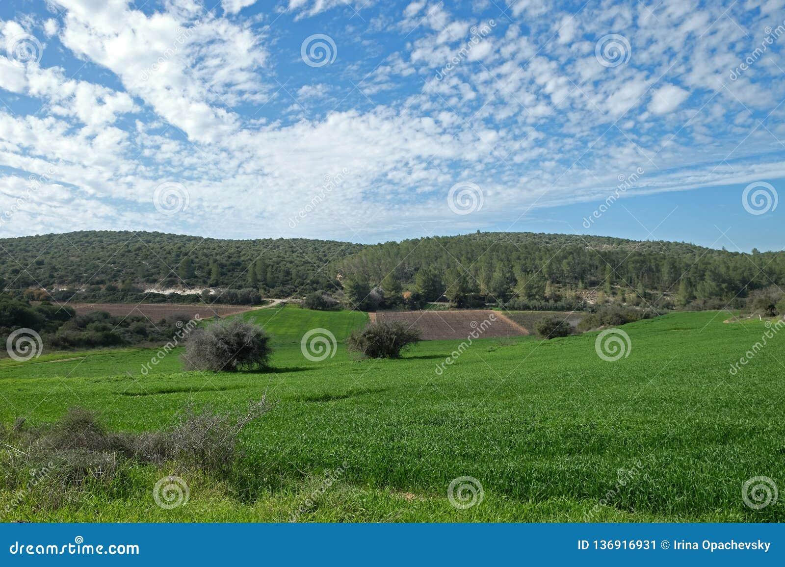 Pola, wzgórza i piękny niebo w Judea, Izrael