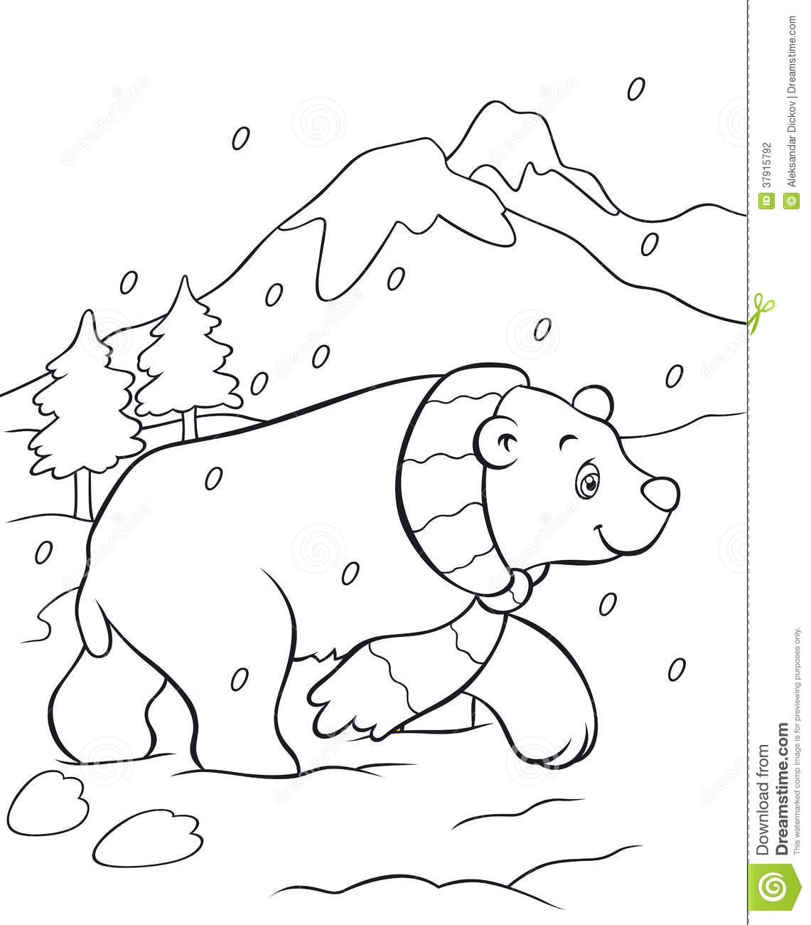 polar bear coloring book stock photography image 37915792