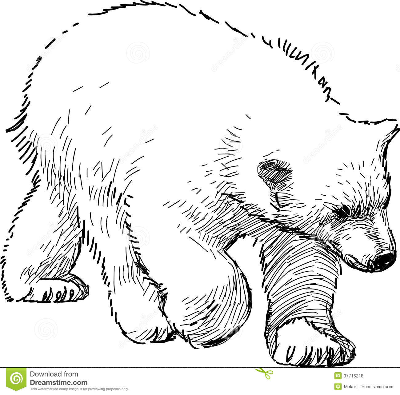 Polar Bear Cub Royalty Free Stock Photos Image 37716218