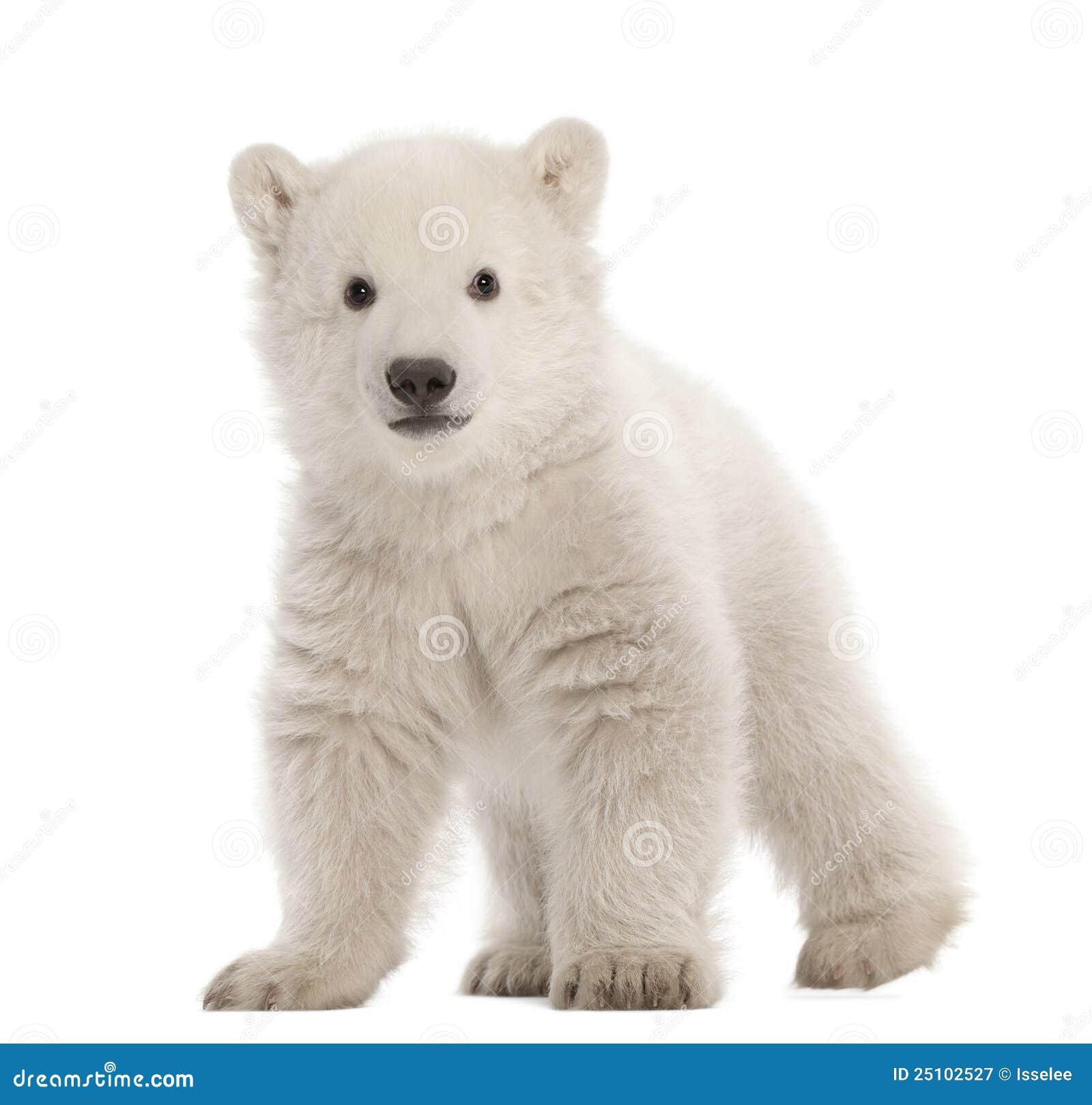 standing bear vector