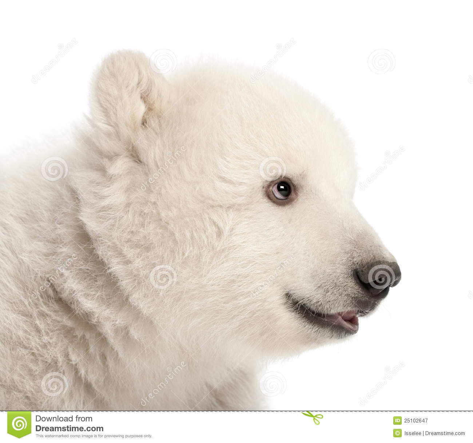 polar bear shot how to make