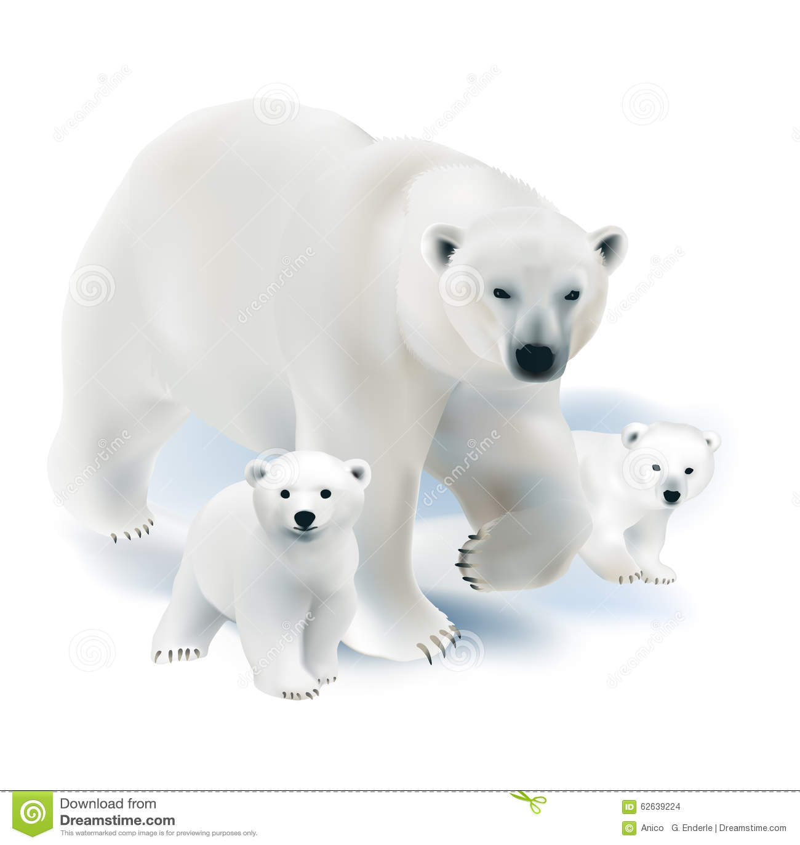 Polar Bear And Cubs Stock Vector Image 62639224