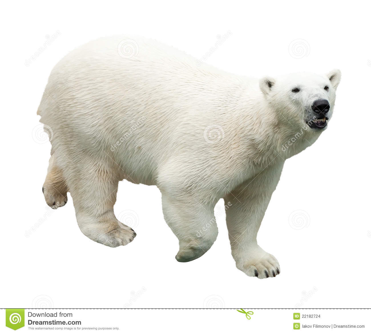 Polar Bear. Isolated Over White Stock Images - Image: 22182724