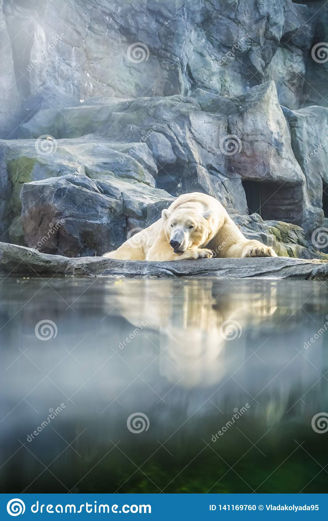 The polar bear lies has a rest among rocks in zoo. A photo in a haze, an indistinct picture because of aquarium glass. Predator