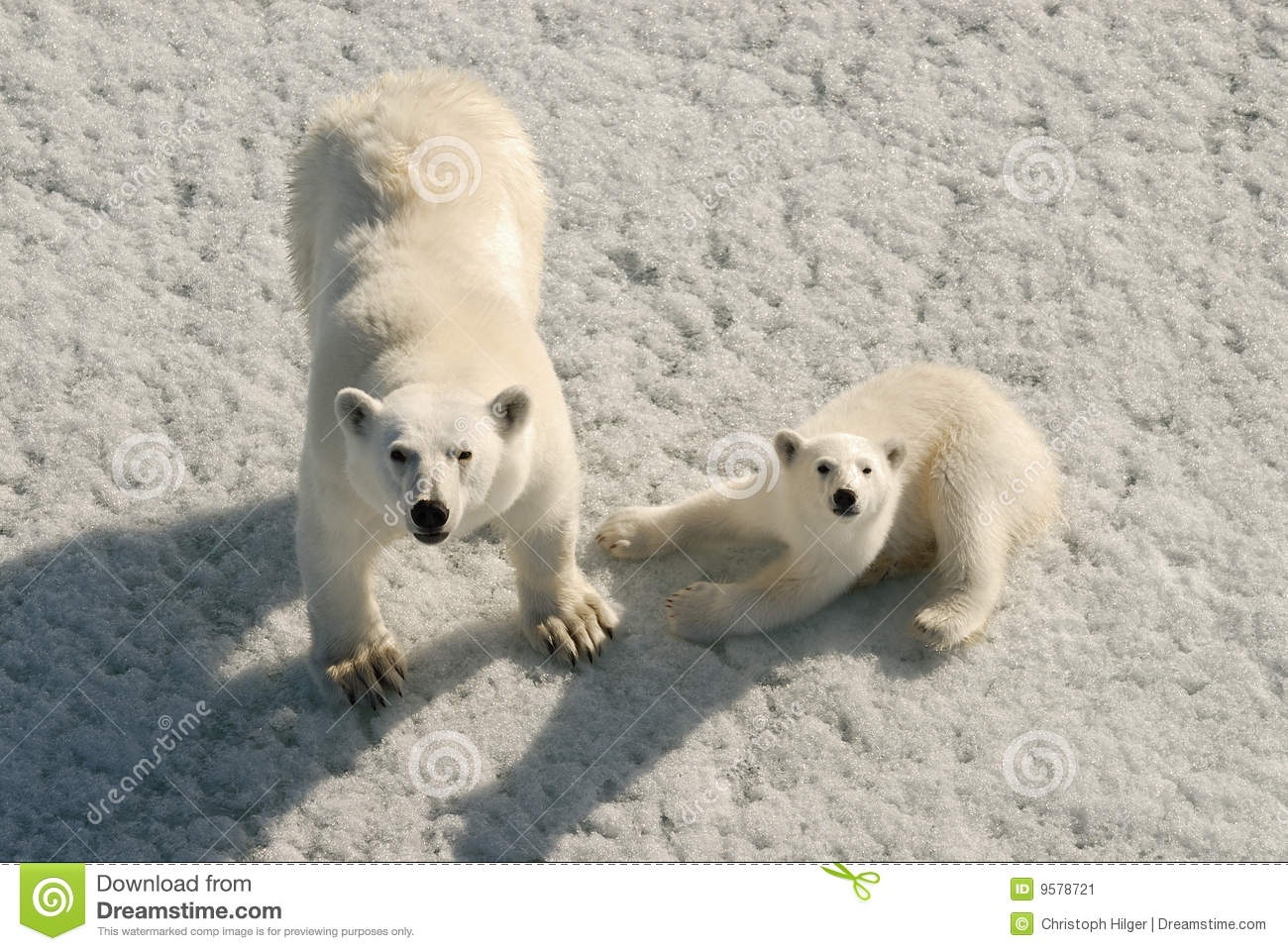 Download Polar bear mother and cub stock image. Image of nature - 9578721