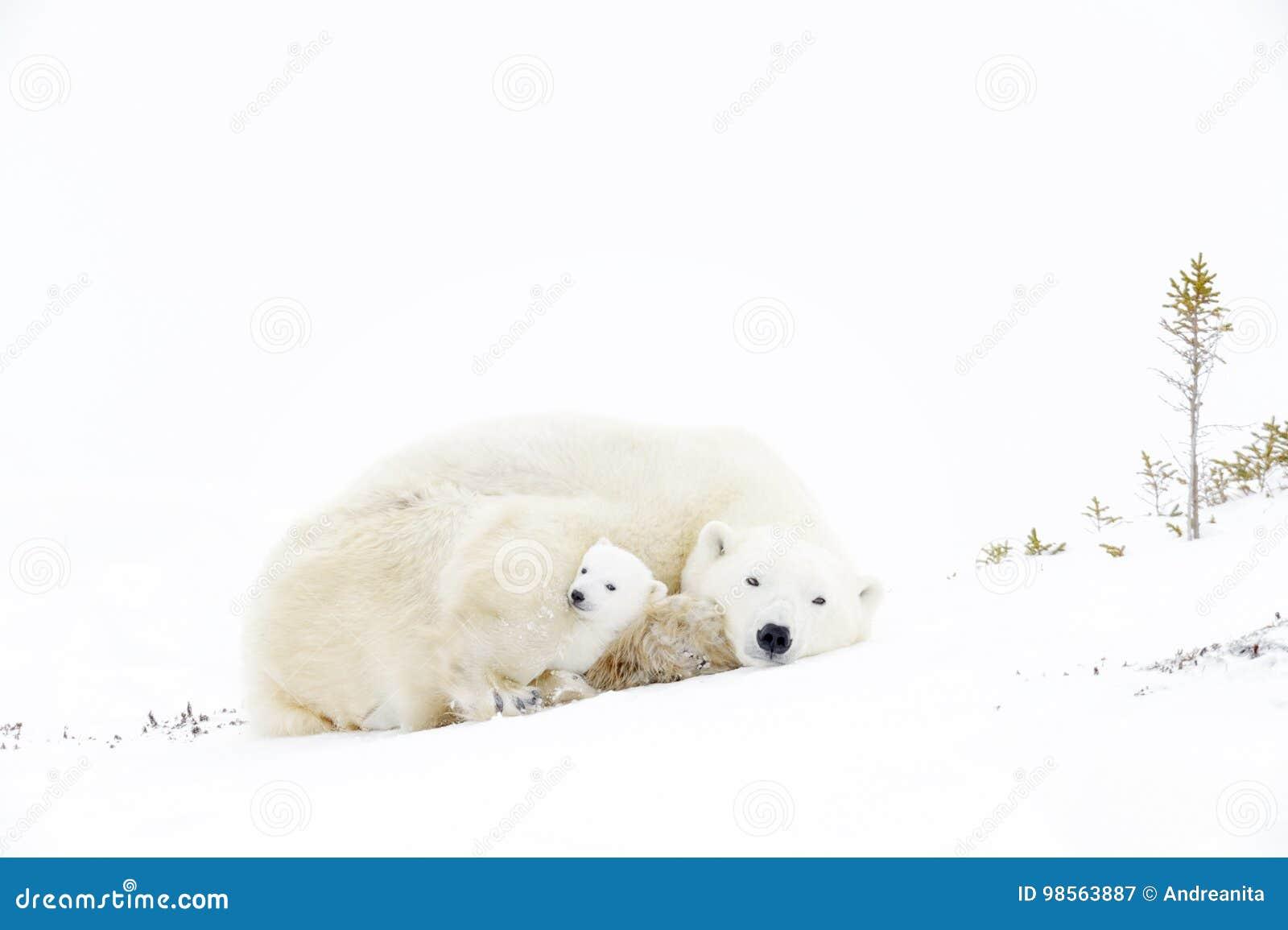 Two bears having enjoyment