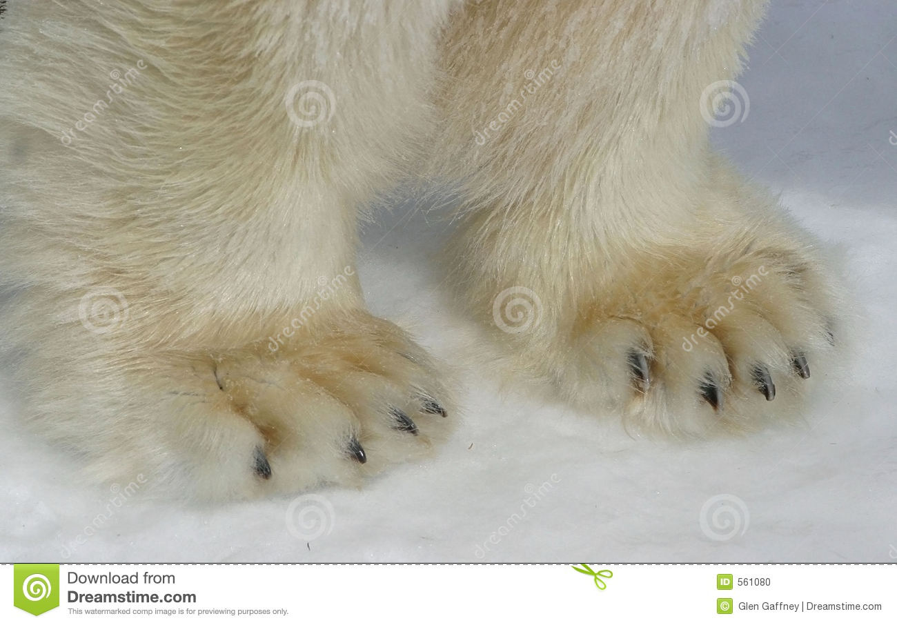 Displaying 17> Images For - Polar Bear Paw Clip Art...