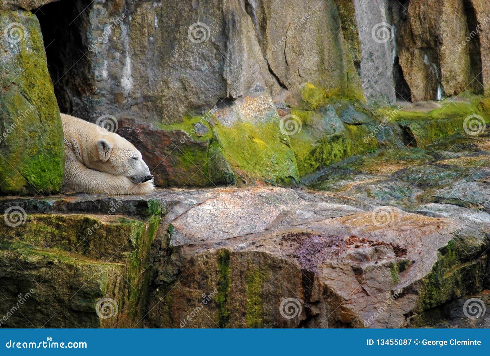 Polar Bear Sleeping Royalty Free Stock Photography - Image ...
