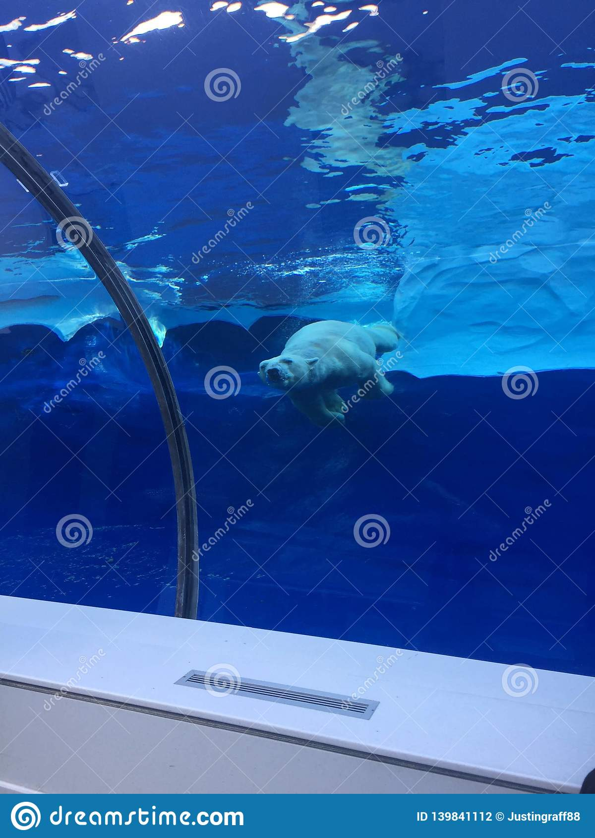 Polar bear swimming in a large pool like the ocean with icebergs